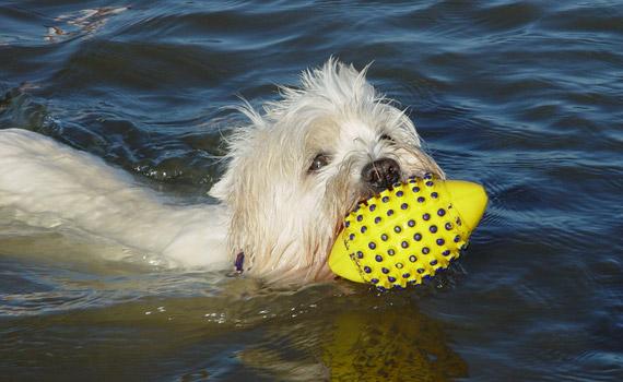 St. Peter-Ording Ferienwohnung Hund